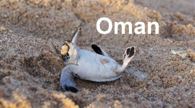 Arabien – Oman